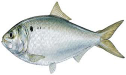 Rhode Island Most Important Fish Product
