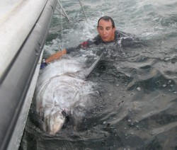 Capt Andy LoCascio with a 108inch 900lb giant tuna saying goodbye just prior to release