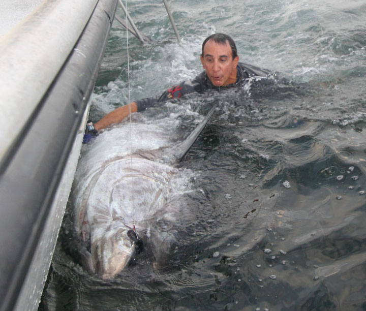900lb Giant Bluefin Tuna Video
