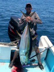 andy-yellowfin-popper