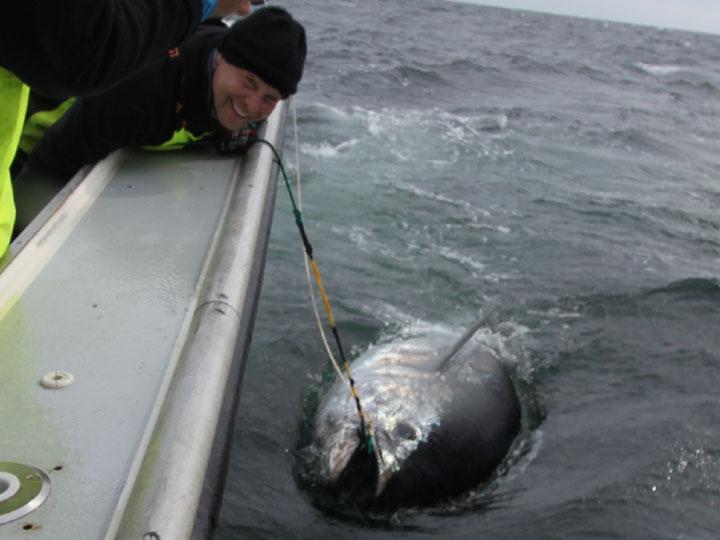 Steve Palmo Giant Tuna