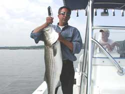 Live lining for Striped Bass - 2003