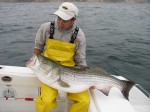 Striped Bass - Block Island
