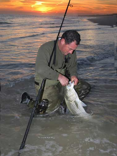 Striped Bass - Surf Release