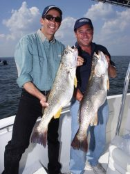 weakfish_02