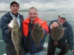 Boston Harbor Flounder
