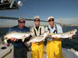 Deepwater Weakfish